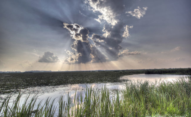 Evenings' Rays Over the Marsh